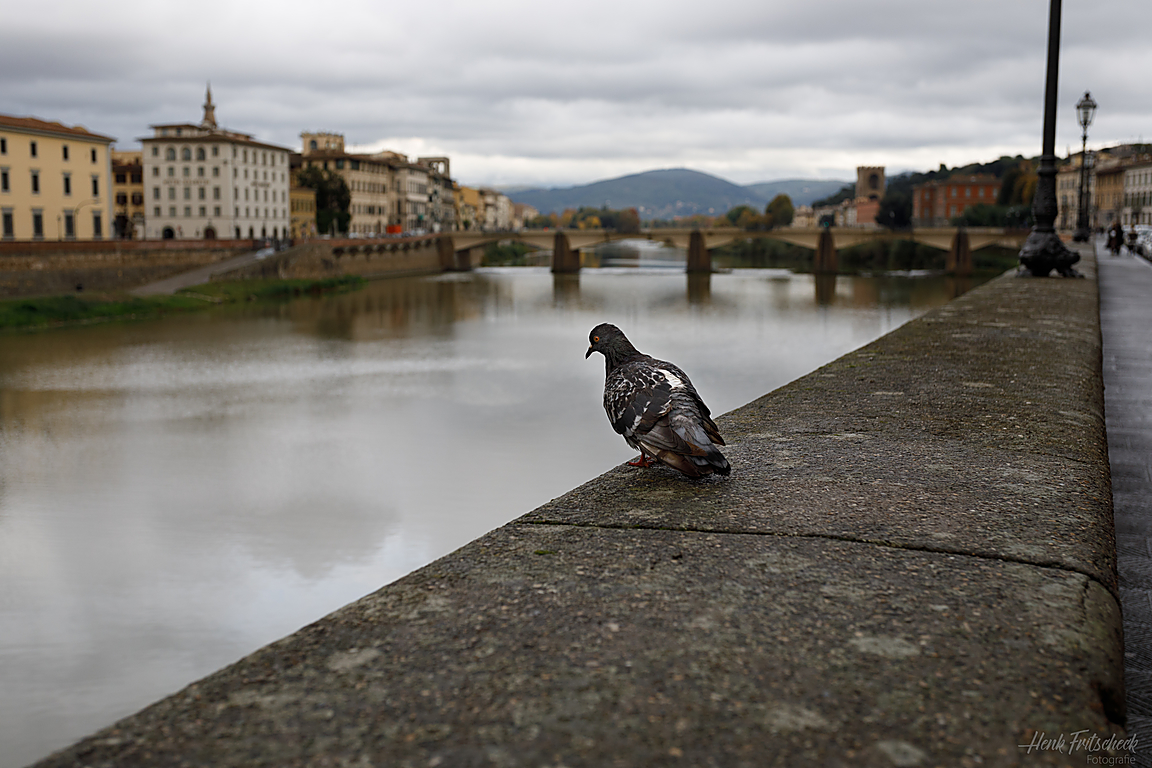 Florence-6019