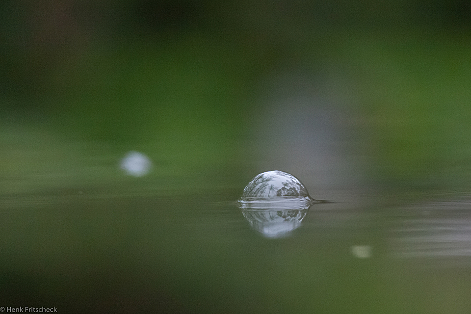Regenbellen in het water