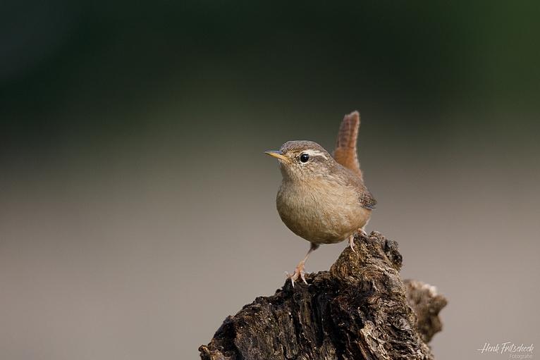 Blog #066 Impressies uit een Vogelhut